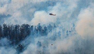 Más de 500 millones de animales muertos por los devastadores incendios en Australia