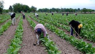 Crecen prestaciones por desempleo en el campo