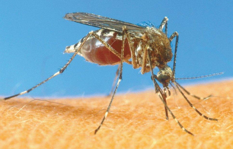 Que es dengue clasico y sus sintomas