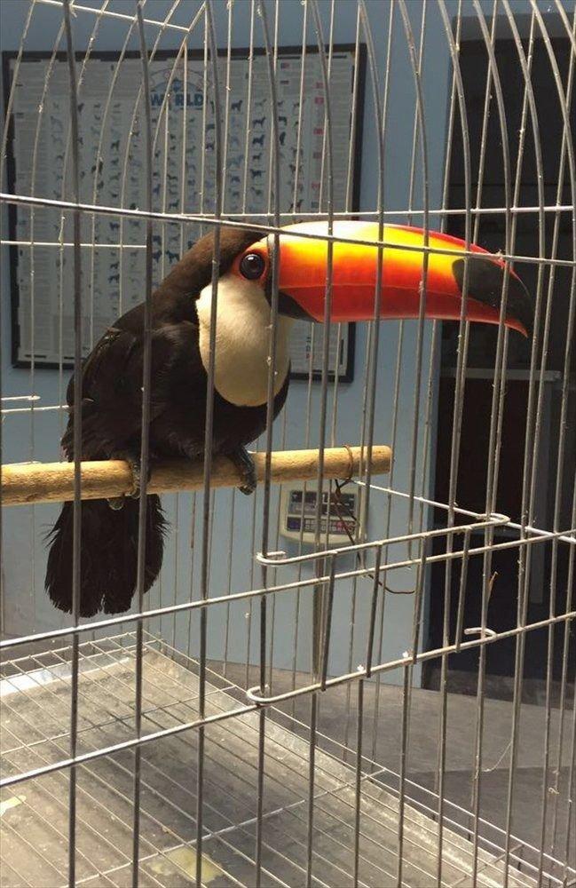 Prohíben atrapar aves para tenerlas de mascota