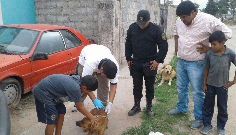 Desmalezan y vacunan mascotas
