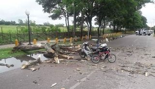 Orán: cayó un árbol y aplastó a un hombre y a sus hijos
