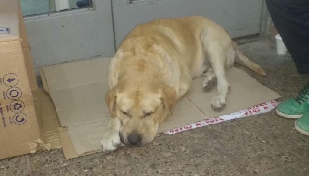 Su humano murió hace una semana pero el perrito lo sigue esperando en la puerta del hospital