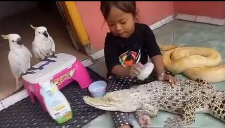 Niña lava los dientes y pone talco a su cocodrilo