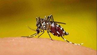 Reportan los primeros dos  casos de dengue del año