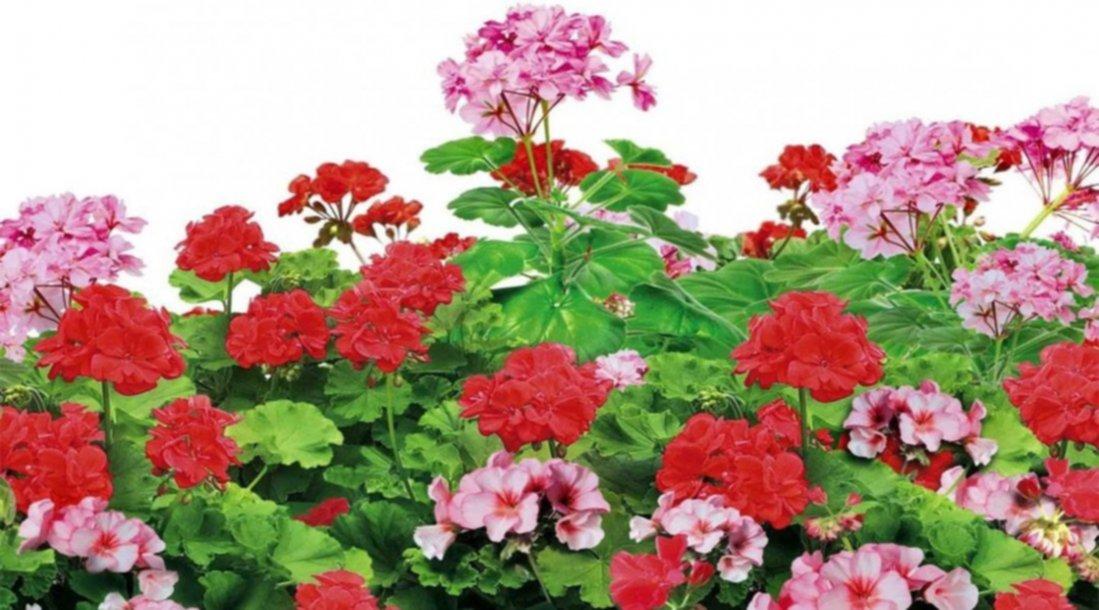 Cinco Plantas Que Dan Flores Durante Todo El Año