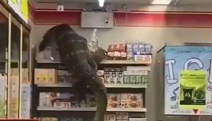 Un enorme lagarto aterrorizó a los clientes de un supermercado
