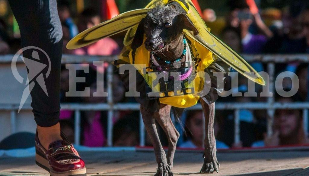 El desfile de mascotas. Fotos: Pablo Yapura