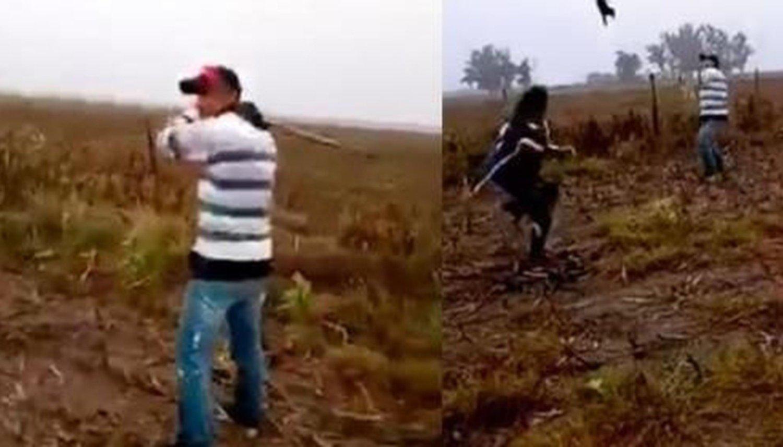 Se grabaron mientras mataban a un perro — Indignante