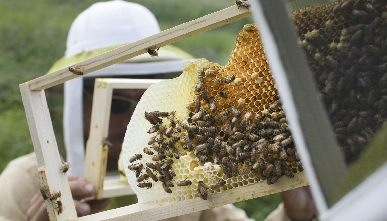 Dan un fuerte  impulso al  desarrollo de la apicultura en  El Galpón