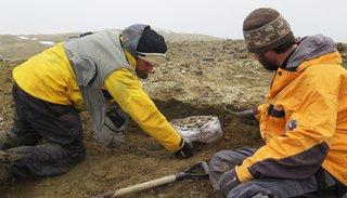 """Hallan restos de un reptil marino similar al """"monstruo del Lago Ness"""" en la Antártida"""