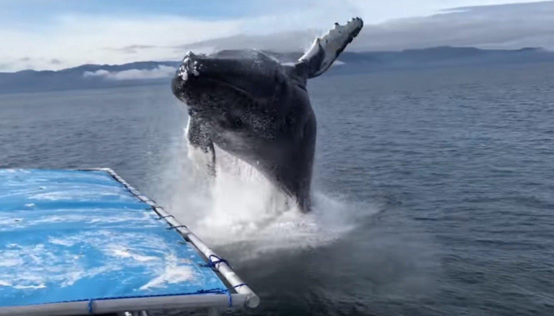 El sorprendente encuentro entre una ballena jorobada y un grupo de turistas