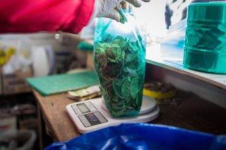 Insólito: las hojas de coca a precio dólar