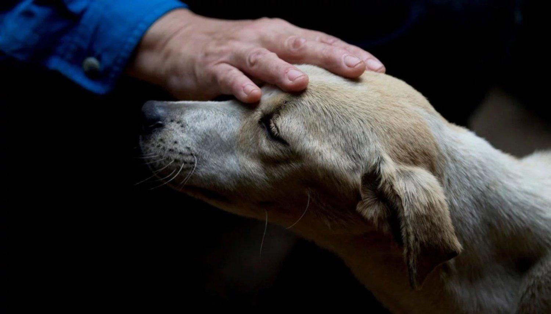 Revelaron qué sienten los perros antes de morir — Desgarrador
