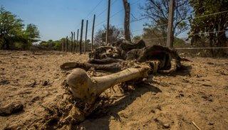 Piden la emergencia por  sequía para el Chaco salteño