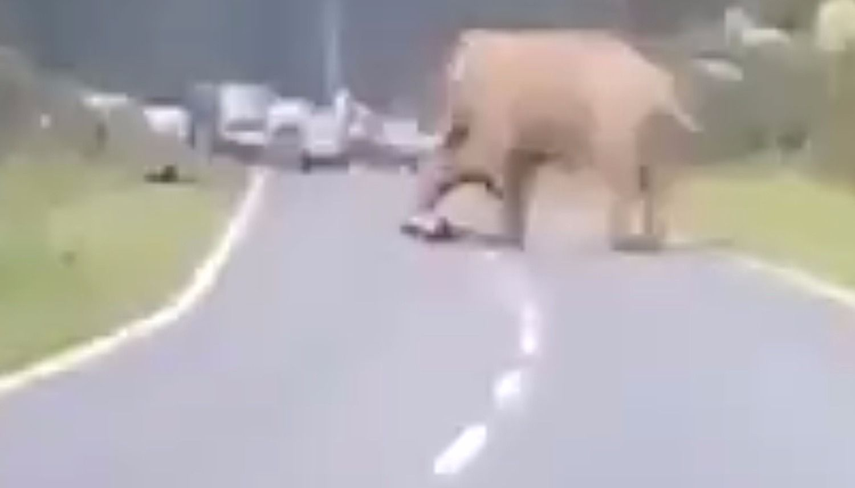 Resultado de imagen para Elefante mata a un hombre que intentó tomarle una fotografía