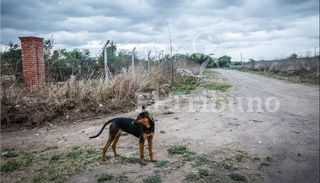 Animales envenenados: Alertan sobre  la alta  toxicidad del  carbofurán
