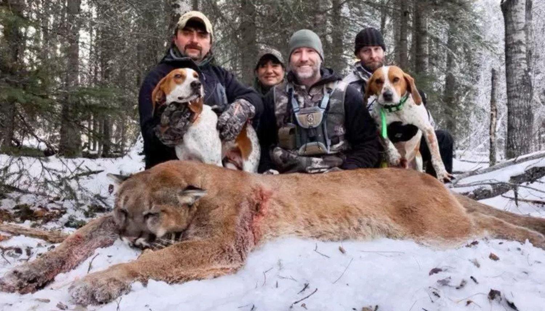 Mató a un puma, mostró cómo lo cocinaba y generó bronca