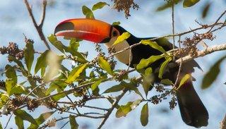 El 50% de las  aves del país se pueden ver en las termas